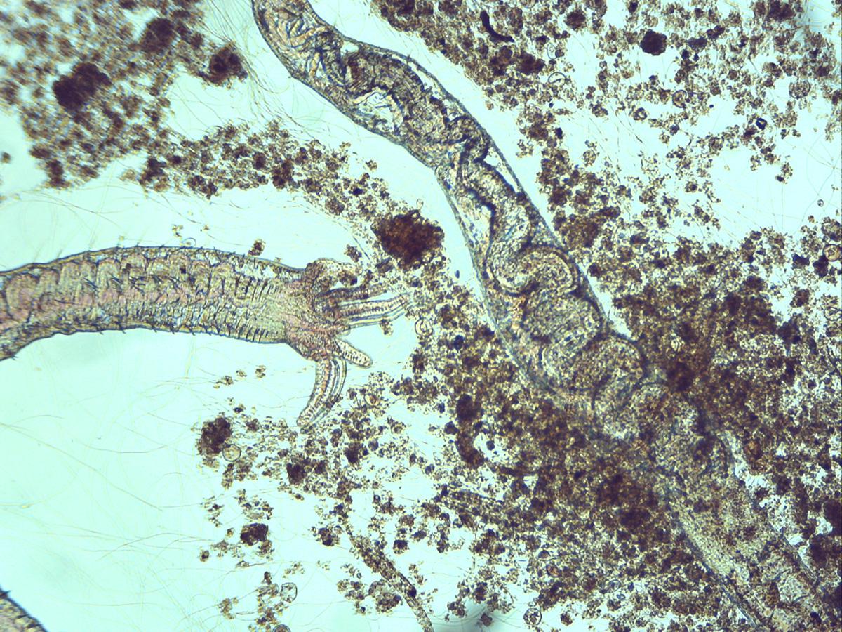 Micro-organismes-BA-10-12-17-OLIGO-ETOILE_2