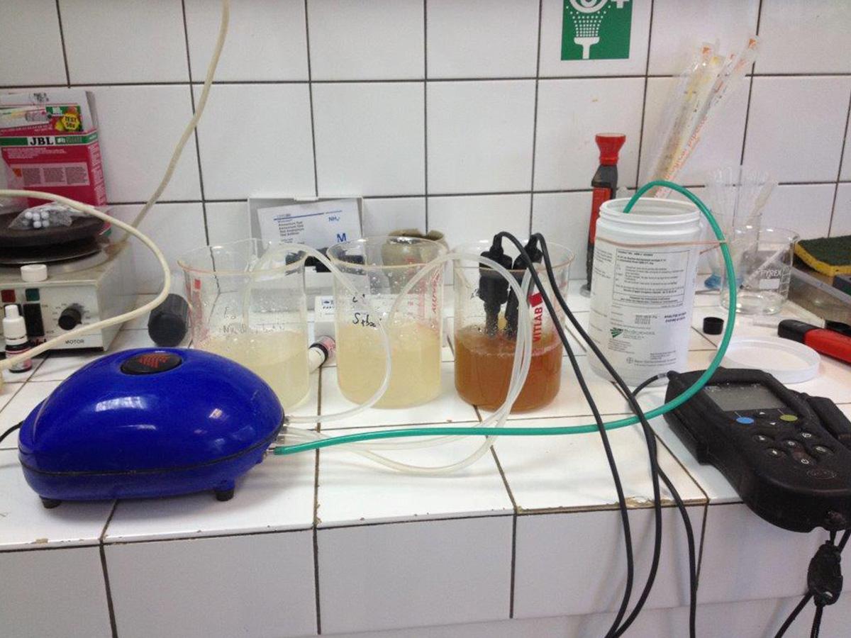 Micro-organismes-Test-nitrification_3